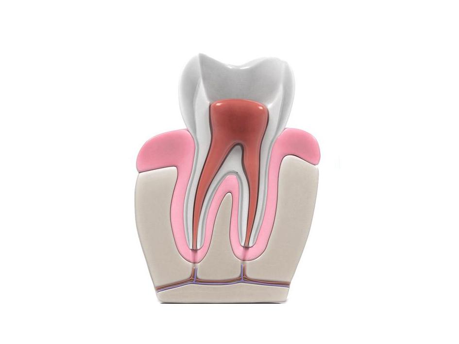 Endodoncia 4